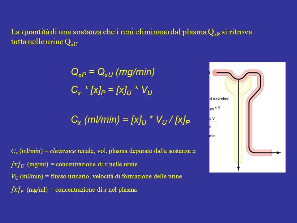 Cx (ml/min) = [x]U * VU / [x]P